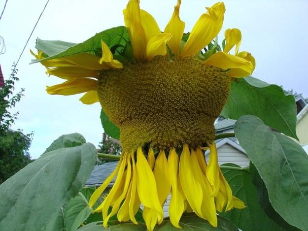 Растения мутанты
