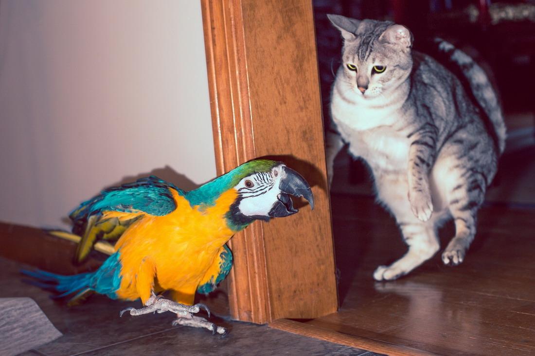 Прикольные , новые и смешные милые животные.