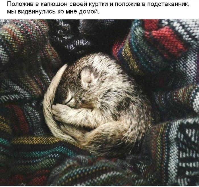 Случайная находка в лесу и спасение крохотного бельчонка (17 фото)