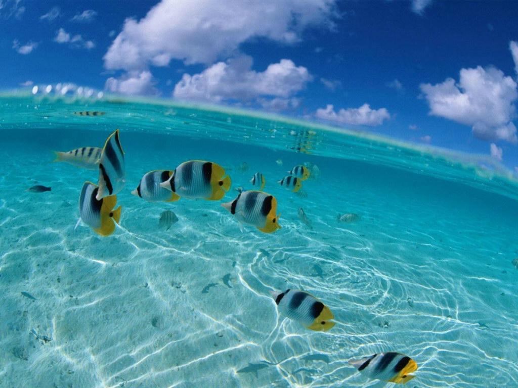 Полуподводные фотографии