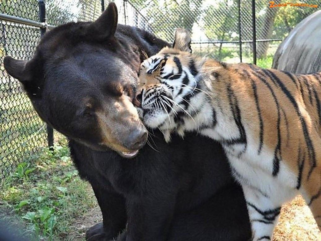 Прикольные, новые милые животные.