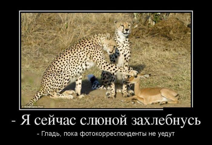 Прикольные, новые и милые животные.