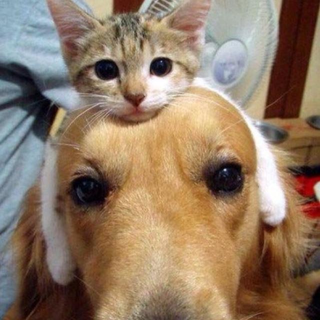 Прикольные  смешные и милые животные.