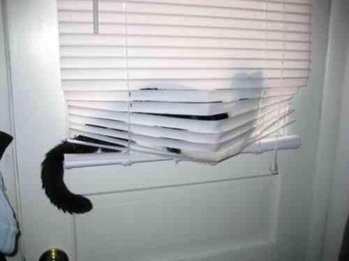 Коты ненавидят жалюзи (24 фото)