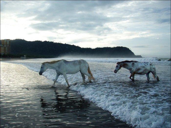Лучшие снимки 2013 года от National Geographic (31 фото)