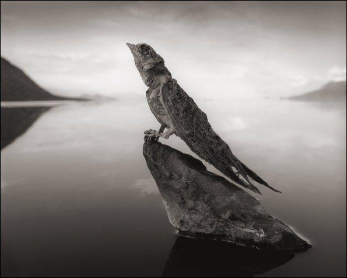 Окаменевшие птицы озера Натрон (6 фото)