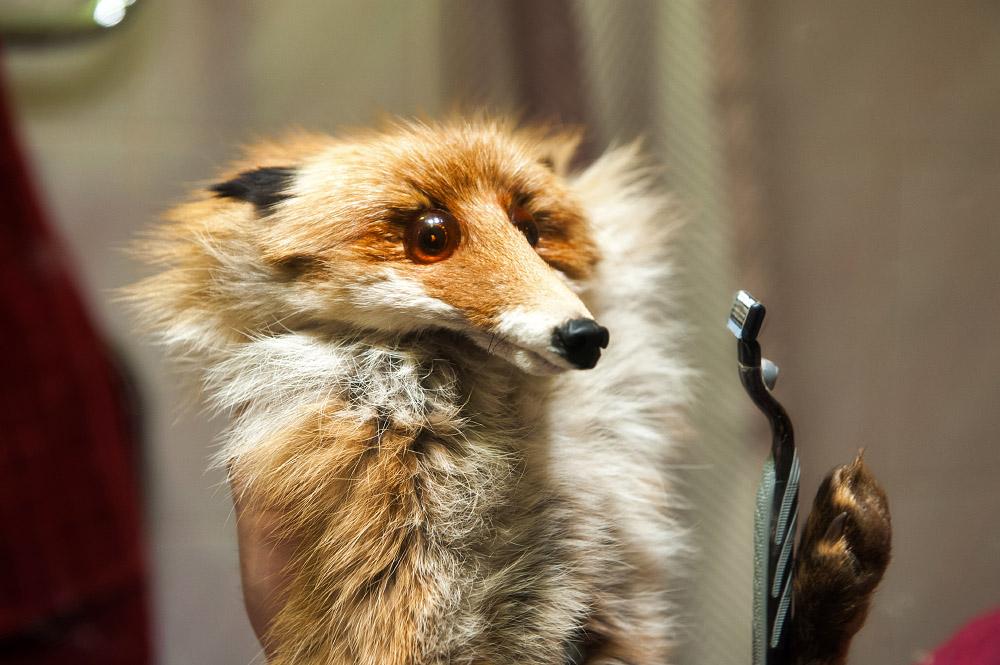 fox05 Привет защитникам животных – Лис