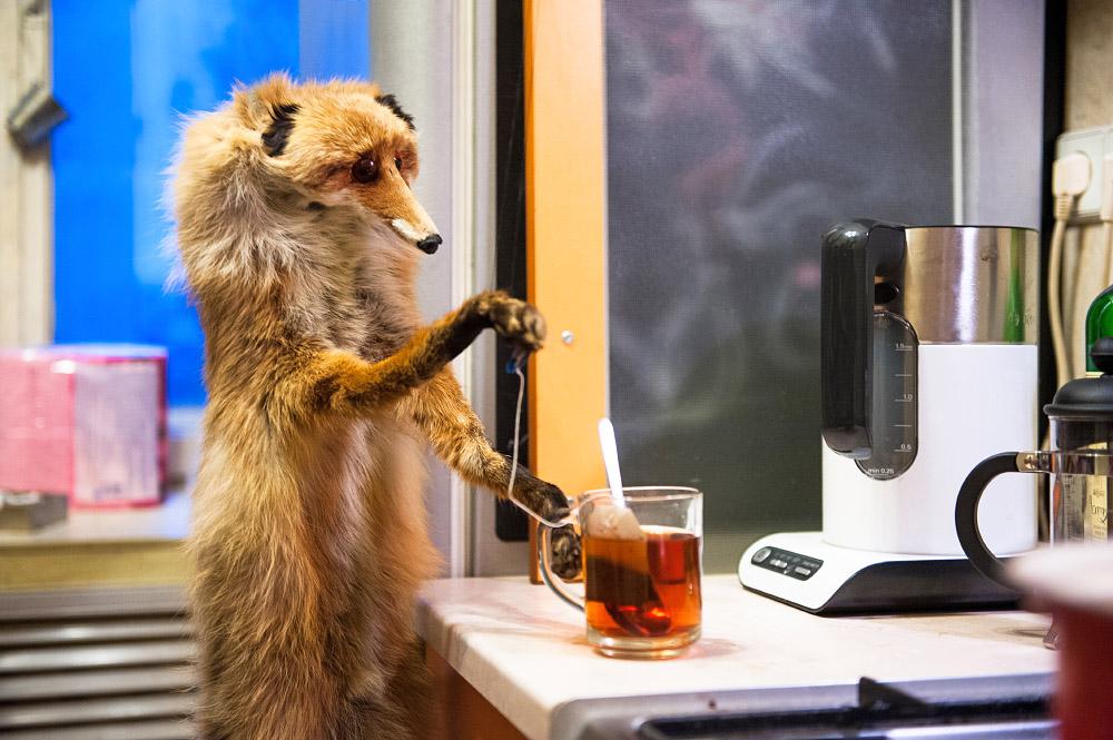 fox07 Привет защитникам животных – Лис