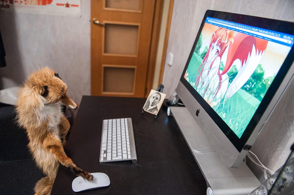 fox11 Привет защитникам животных – Лис