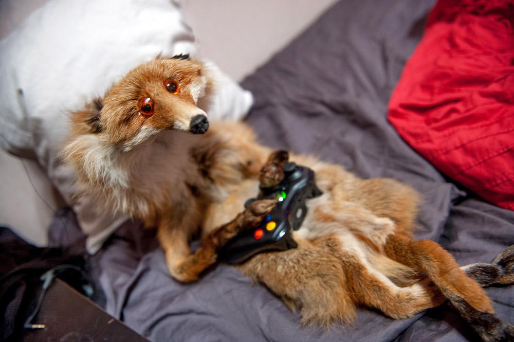 fox12 Привет защитникам животных – Лис