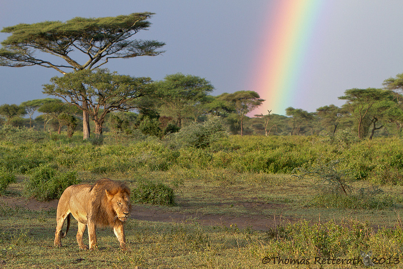 Удивительно красочный и разнообразный животный мир.