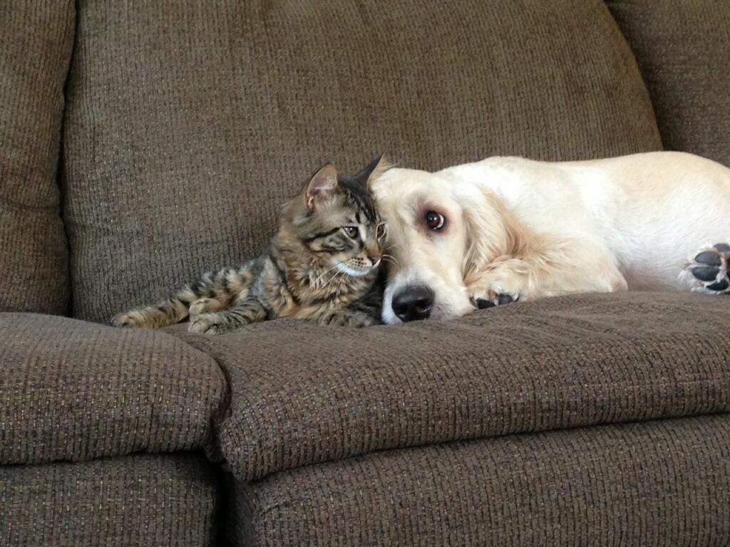 Милые и смешные животные.