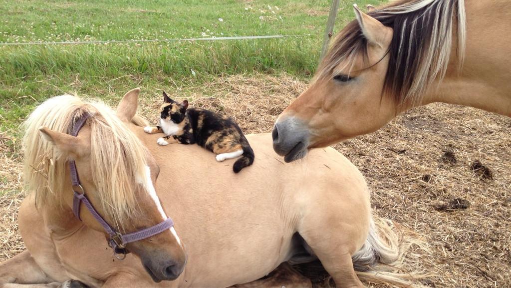 Милые и прикольные животные..