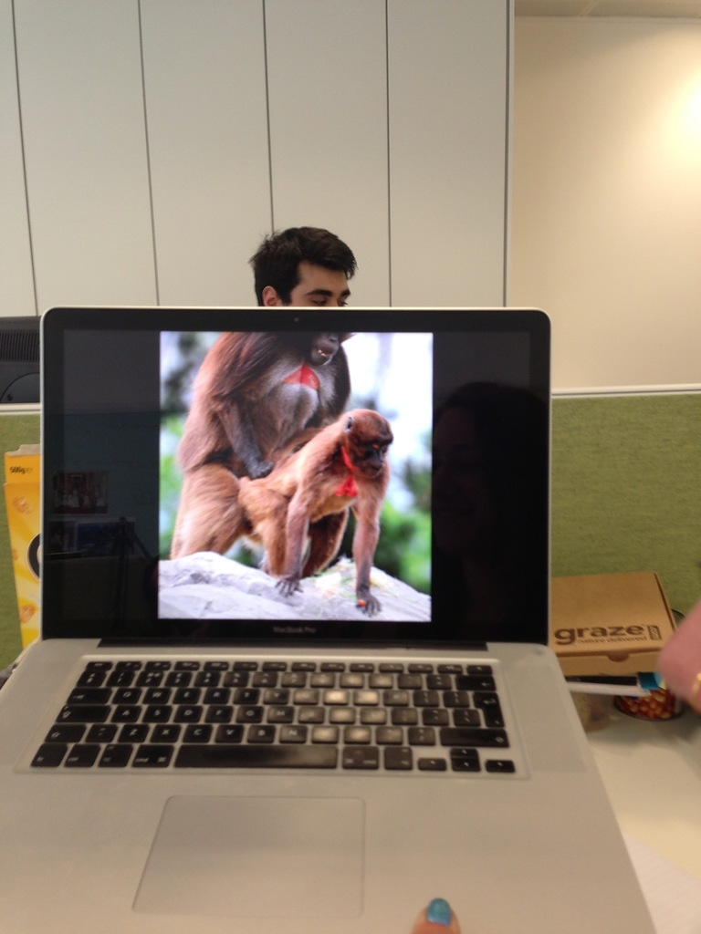 Офисный фотобомбинг