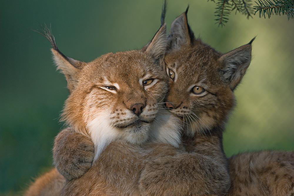Прикольные и милые животные.