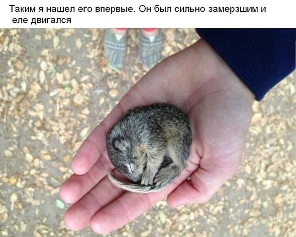 belka_01.jpg