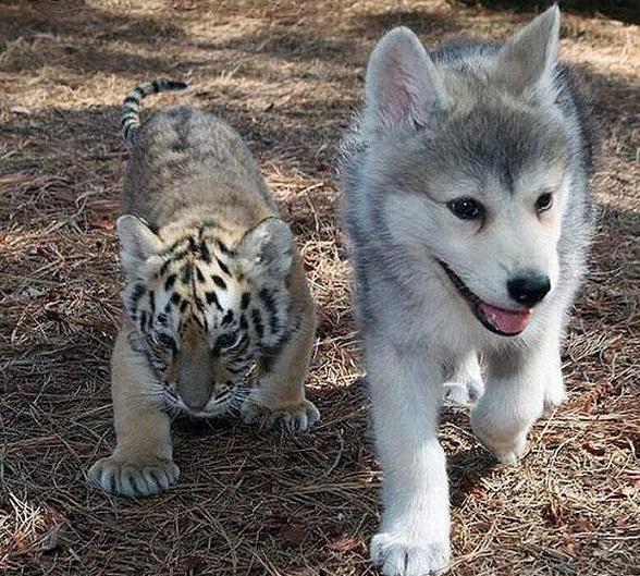 funny_animals_prikolnie_ghivotnie_na_zapilili.ru_121.jpg