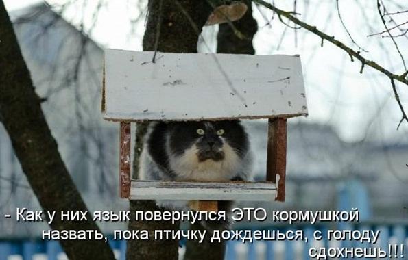kotomatrix_08.jpg