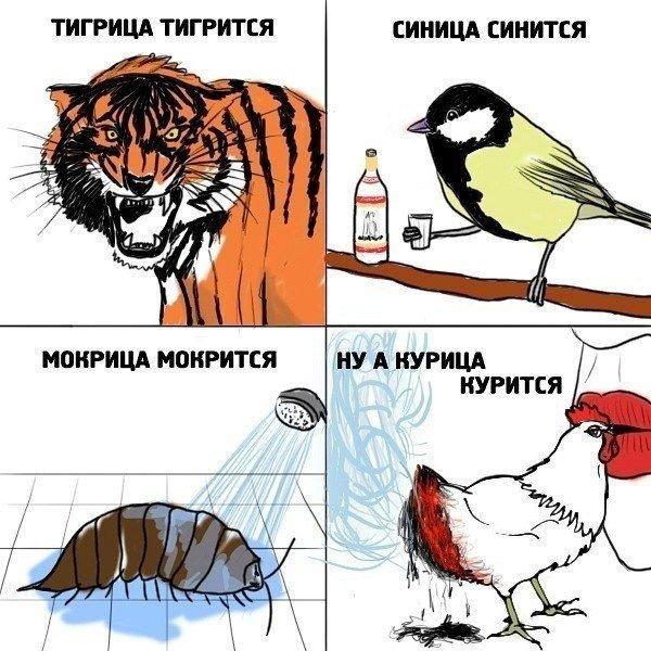 prikolnie_kartinki_zapilili.ru_56.jpg