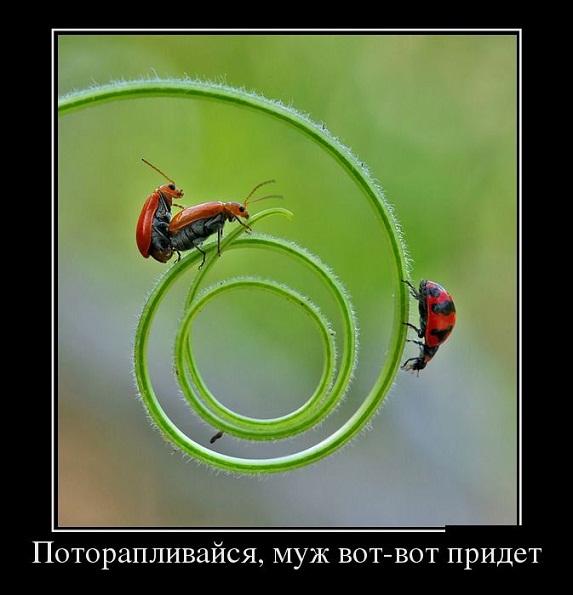 prikolnie_demotivatori_na_zapilili.ru_52.jpg