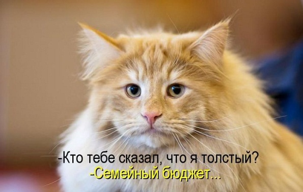 kotomatrix_02.jpg