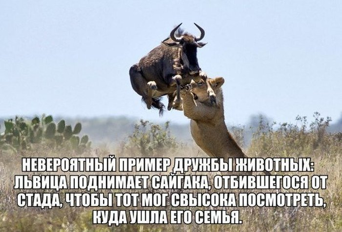 prikolnie_kartinki_zapilili.ru_123.jpg