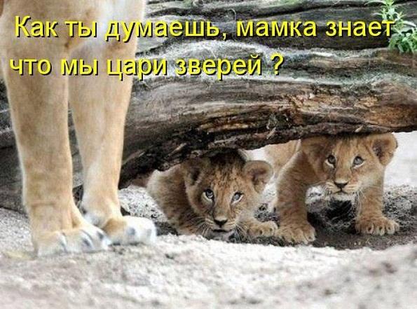 cm_20130719_02976_003.jpg