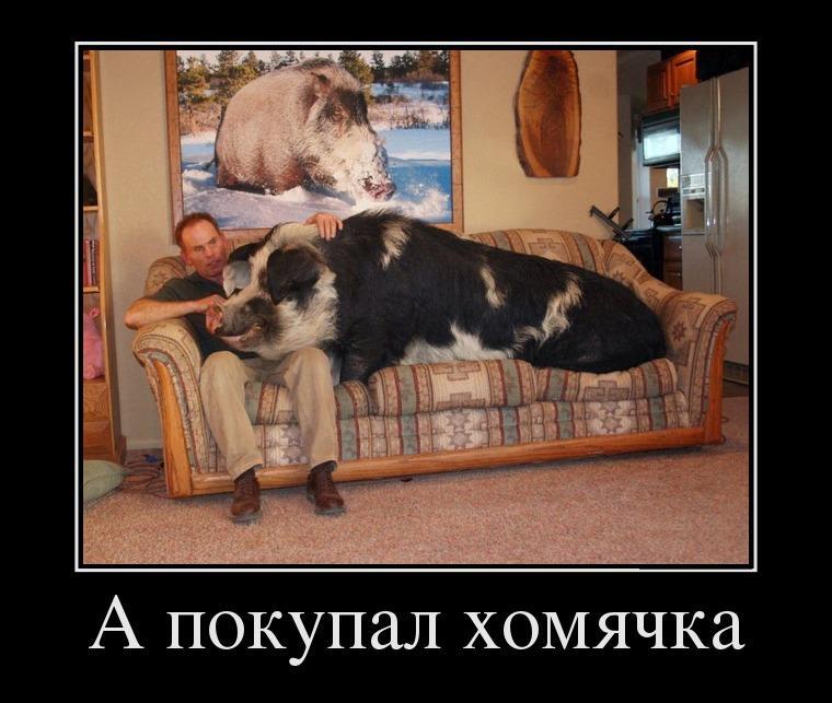 картинки хомяка смешные